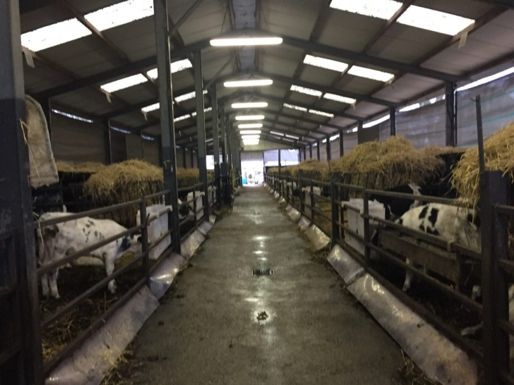 Fantastic Video: A Shed Designed To House 300 Calves - Agriland.ie Calf Housing Plans Photo