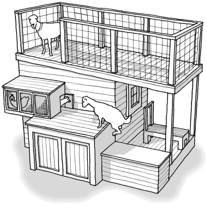 Exquisite Goat Shelter Plans Shed Front Newfangled The – Markthedev Goat Housing Plans Picture