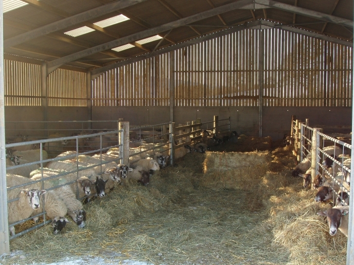Picture of Apartments : Building Extra Calf Housing Youtube Calf Housing Plans Image
